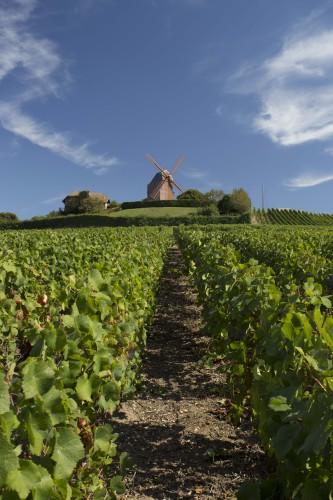 Vignes Mumm crédits Gérard Uferas (2)