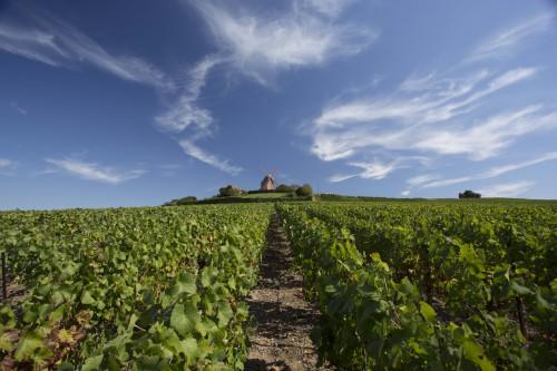 Vignes Mumm crédits Gérard Uferas